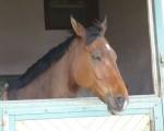 Saumurois-mai-2010-(26)