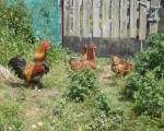 Stagadon-4-5-juillet-2009-(30)
